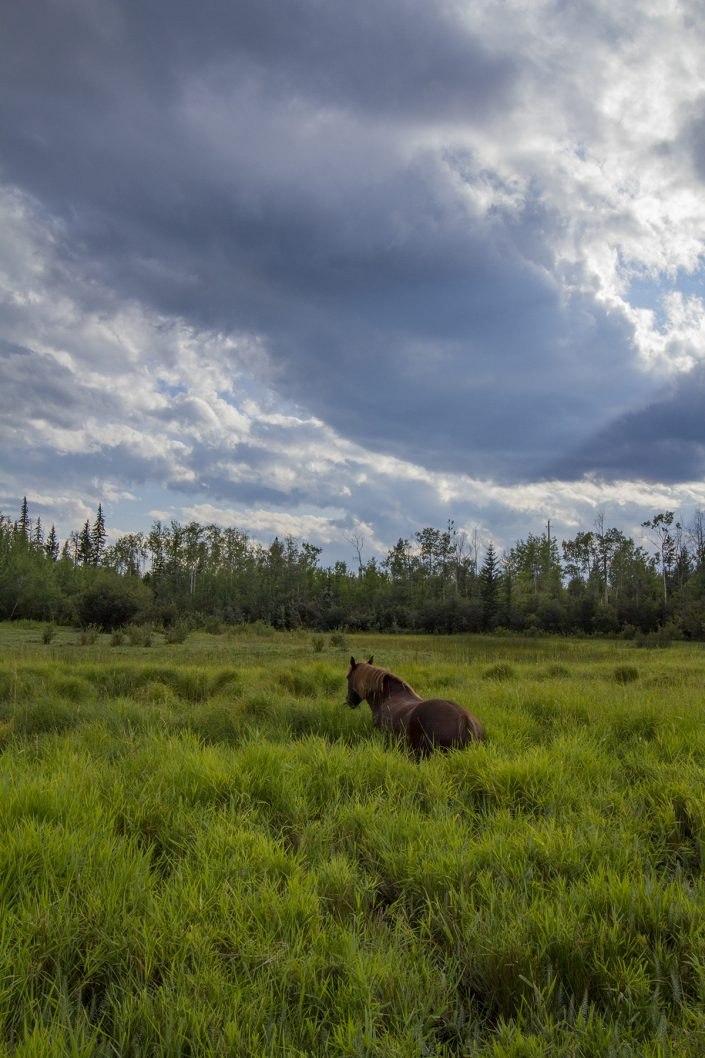 A dark exposure, a wide lush marsh, a horse facing away half submerged in tall grass, looking at a giant dark cloud looming in the sky